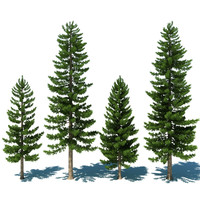 Pine Tree Collection